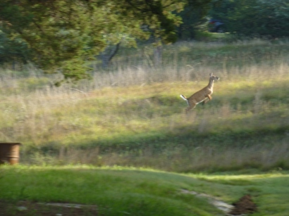 And a few deer crossing the meadow