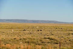 We saw lots of antelope in fields next to the highway