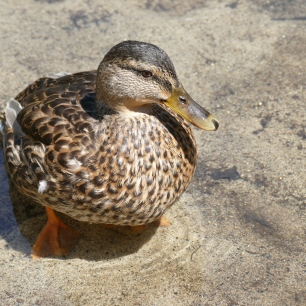 This cute little duck was right next to us